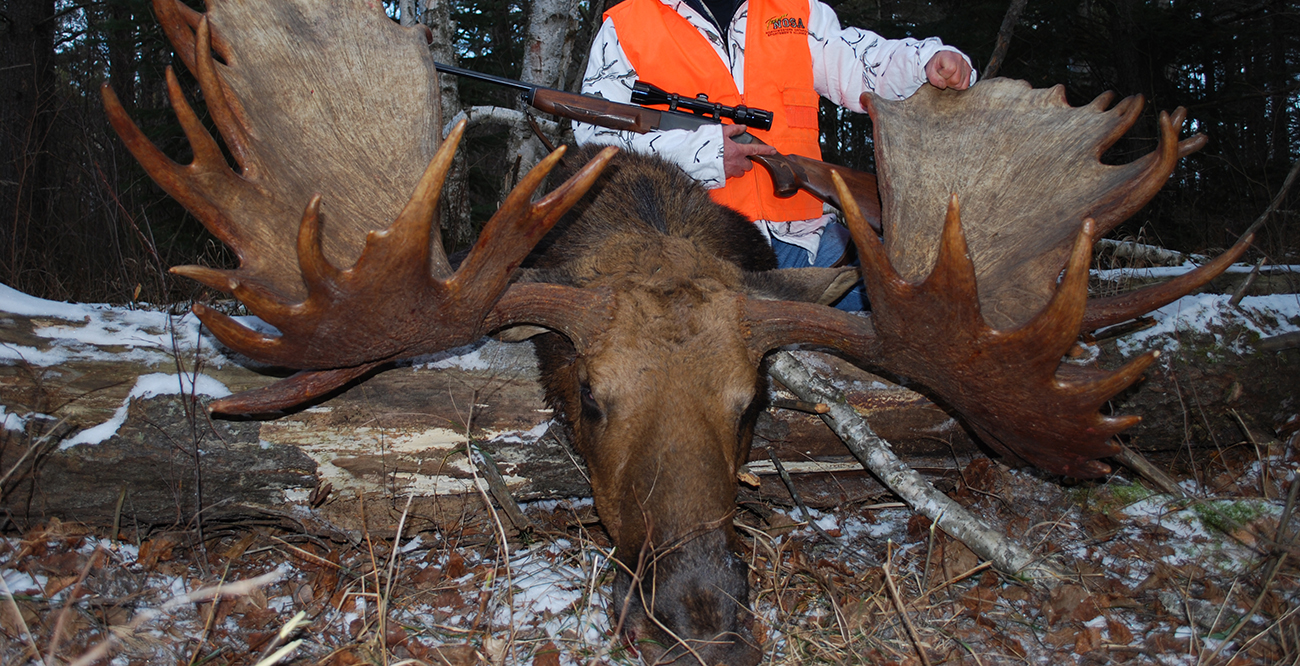 <h2>Moose Hunting</h2>  Join in the moose & bear hunting trips season in Timmins Ontrio.